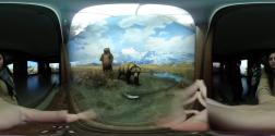 natural-history_bear