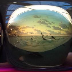 natural-history_dolphin