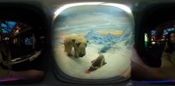 natural-history_polar